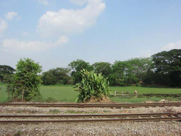 Yangon, urban agriculture